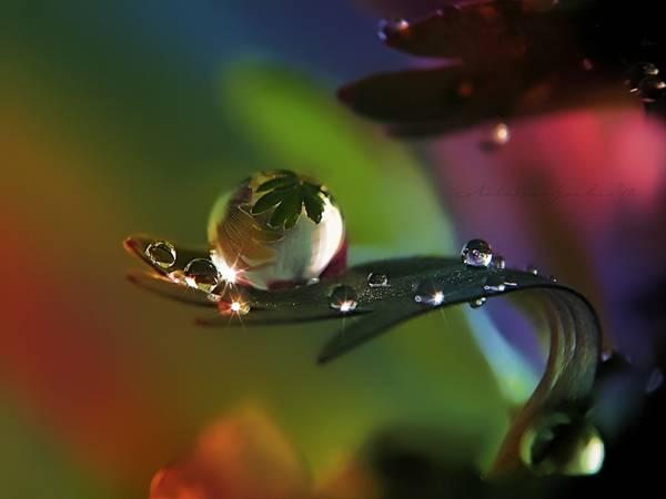 sparkling_rain_drops_on_leaf_colourful_background.jpg